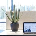 Konstgjorda växter Aloe Vera