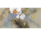 ZilenZio absorbenter Orkidé