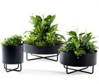 Konstgjorda växter Johanson Design Shima Garden